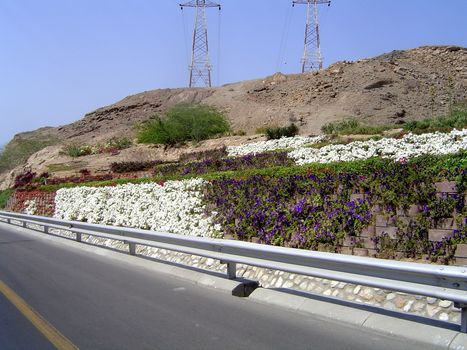 Oman: Muscat picture 8