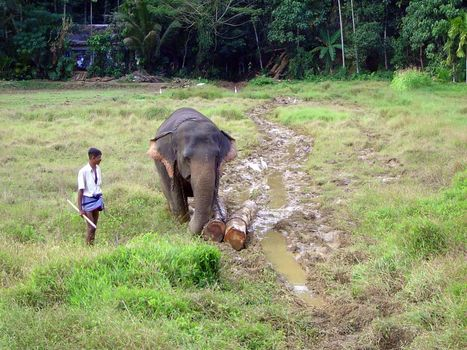 Sri Lanka: Elephant Power picture 1