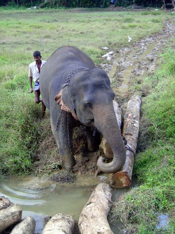 Sri Lanka: Elephant Power picture 4