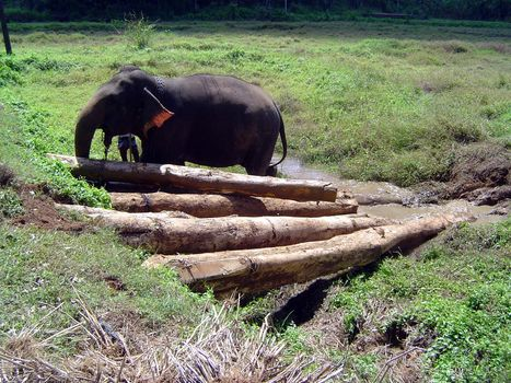 Sri Lanka: Elephant Power picture 8
