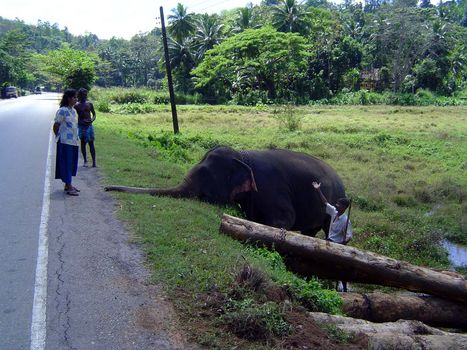Sri Lanka: Elephant Power picture 10