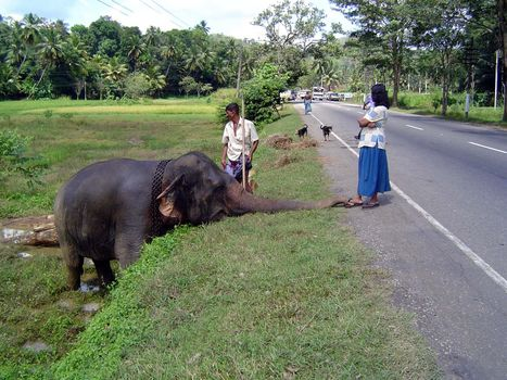 Sri Lanka: Elephant Power picture 11