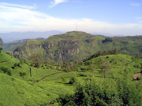 Sri Lanka: Tea Country picture 42
