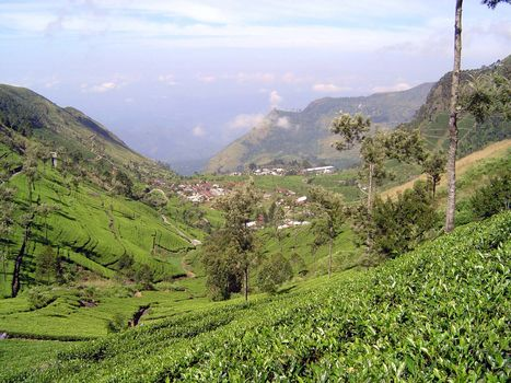 Sri Lanka: Tea Country picture 35