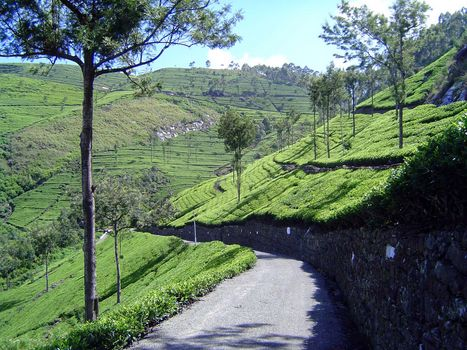 Sri Lanka: Tea Country picture 43