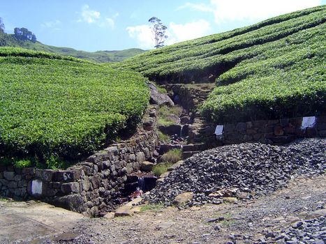 Sri Lanka: Tea Country picture 44