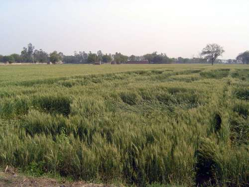 Northern India: Rani Kheri, Khaluwas, Maheva picture 7