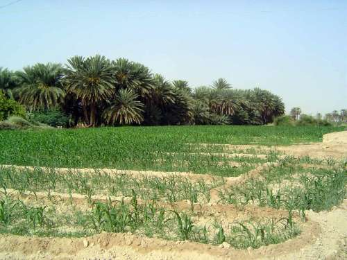 Yemen: Hadramaut Irrigation picture 5