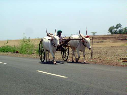 Peninsular India: Karnataka Road Trip picture 37