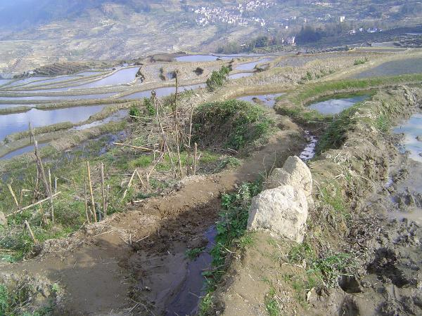 China: Hani Terraces 1: Walking a Channel picture 30
