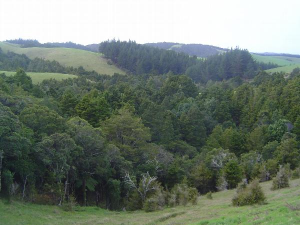 New Zealand: Whangarei Heads picture 3